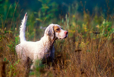 Companion Gundog Training