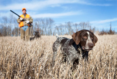 Gundog Companion Training